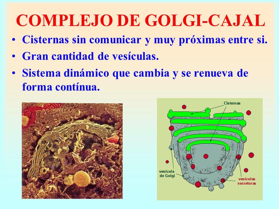 COMPLEJO DE GOLGI-CAJAL