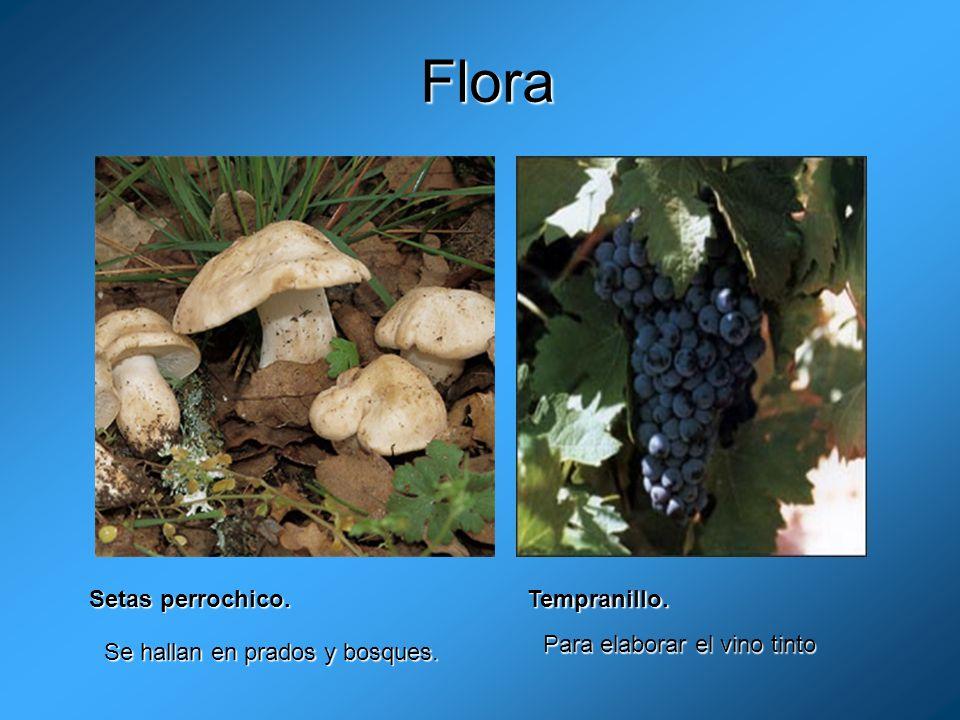 Flora Setas perrochico. Tempranillo. Para elaborar el vino tinto