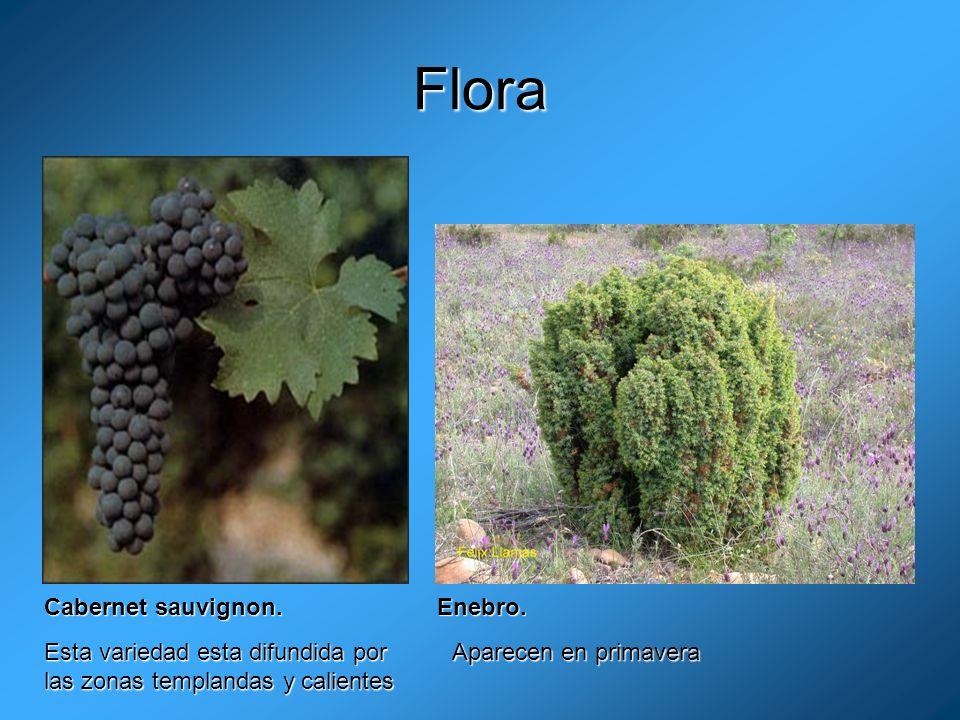 Flora Cabernet sauvignon. Enebro.