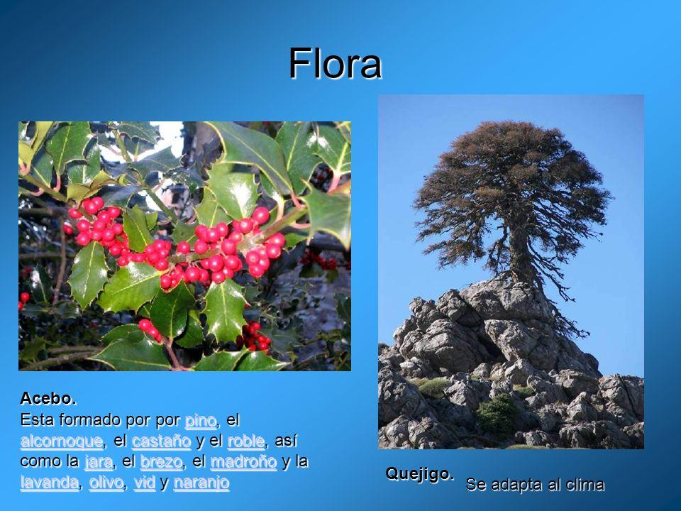 Flora Acebo.