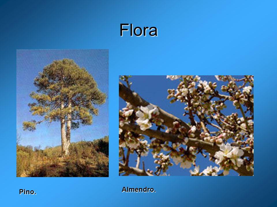 Flora Almendro. Pino.