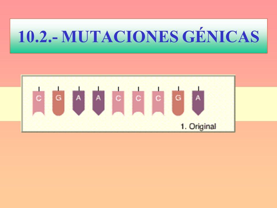 10.2.- MUTACIONES GÉNICAS