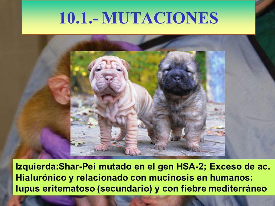 10.1.- MUTACIONES