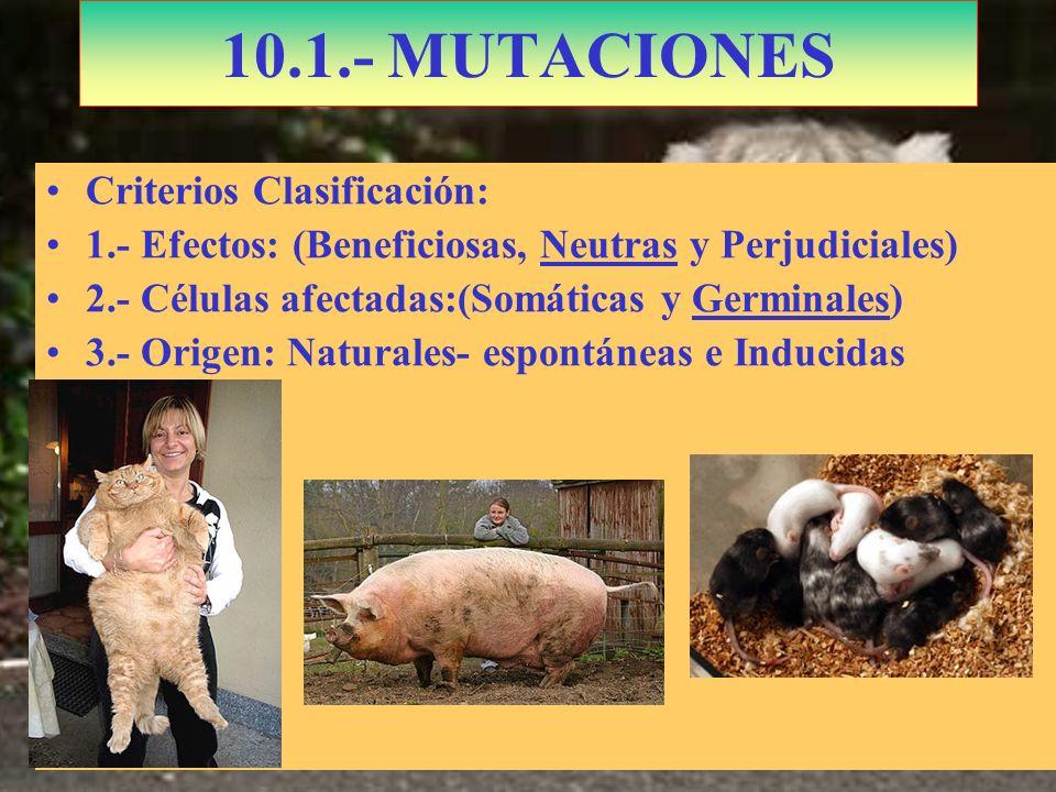10.1.- MUTACIONES Criterios Clasificación: