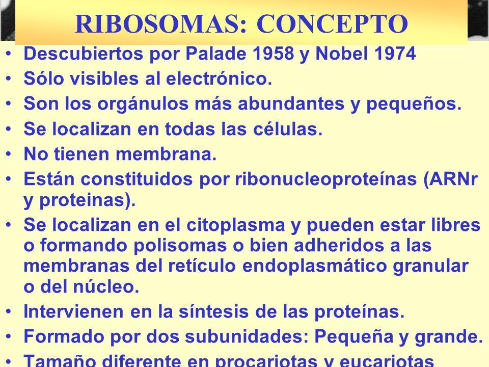RIBOSOMAS: CONCEPTO Descubiertos por Palade 1958 y Nobel 1974
