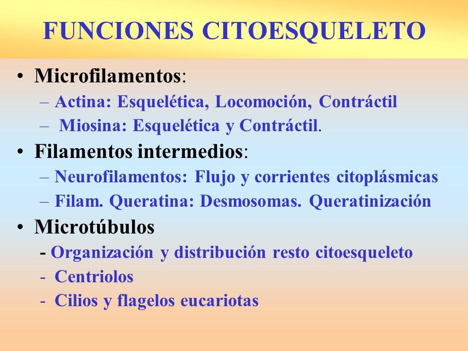 FUNCIONES CITOESQUELETO