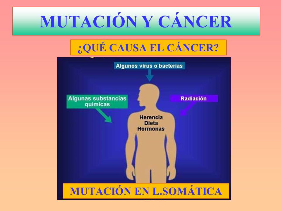 MUTACIÓN Y CÁNCER ¿QUÉ CAUSA EL CÁNCER MUTACIÓN EN L.SOMÁTICA
