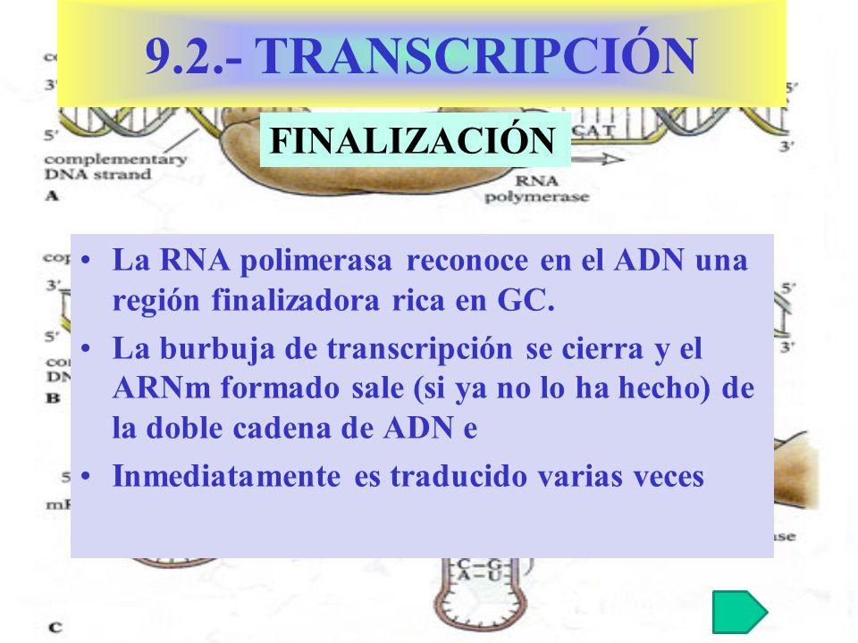 9.2.- TRANSCRIPCIÓN FINALIZACIÓN