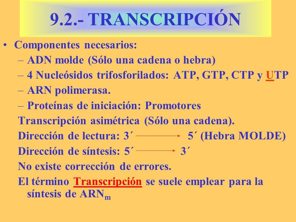 9.2.- TRANSCRIPCIÓN Componentes necesarios: