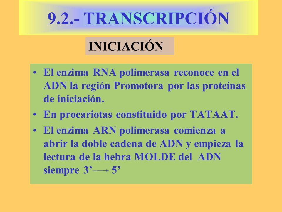 9.2.- TRANSCRIPCIÓN INICIACIÓN