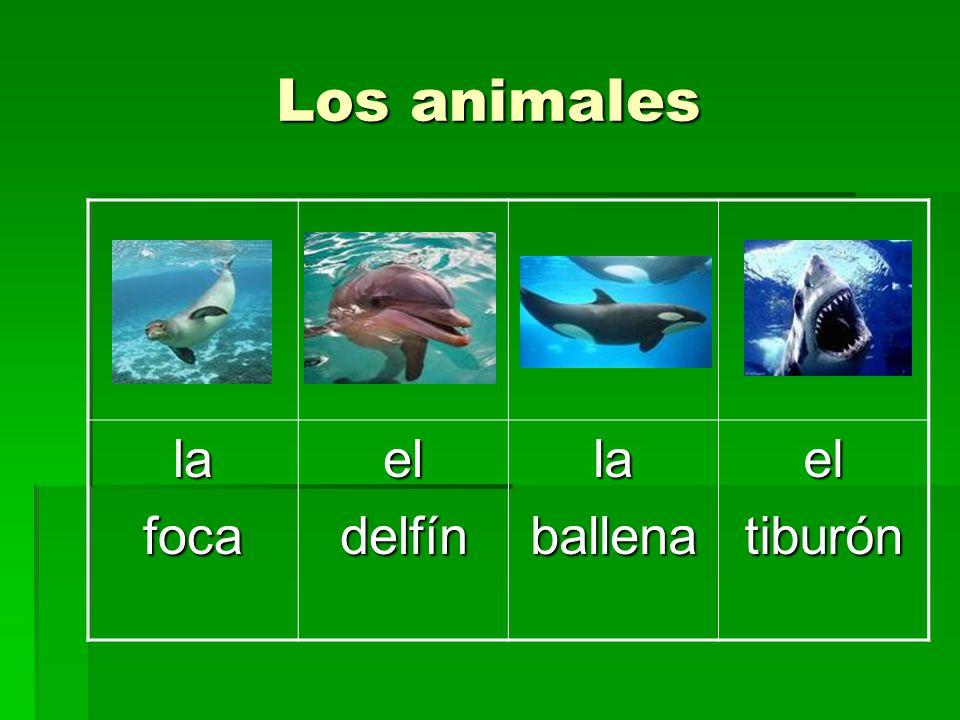 Los animales la foca el delfín ballena tiburón