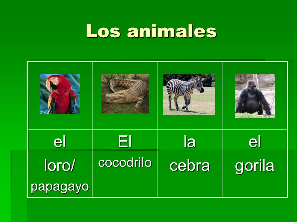 Los animales el loro/ papagayo El cocodrilo la cebra gorila
