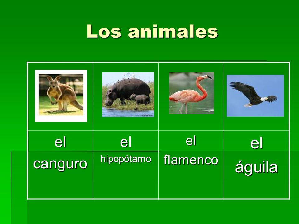 Los animales el canguro hipopótamo flamenco águila