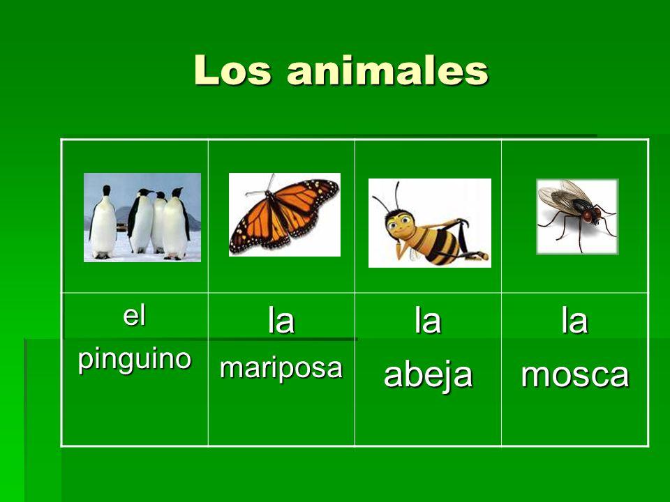 Los animales el pinguino la mariposa abeja mosca