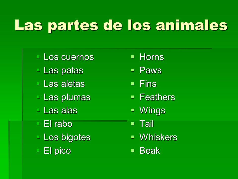 Las partes de los animales