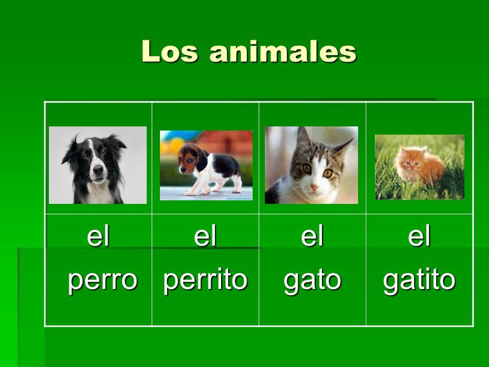 Los animales el perro perrito gato gatito