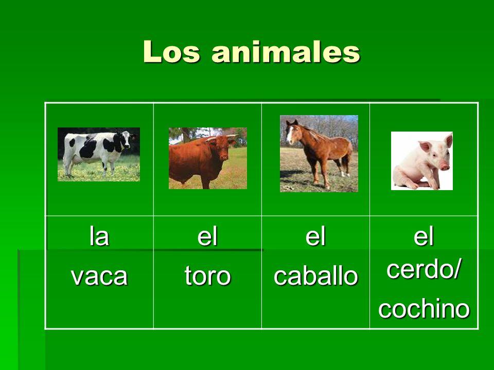 Los animales la vaca el toro caballo el cerdo/ cochino
