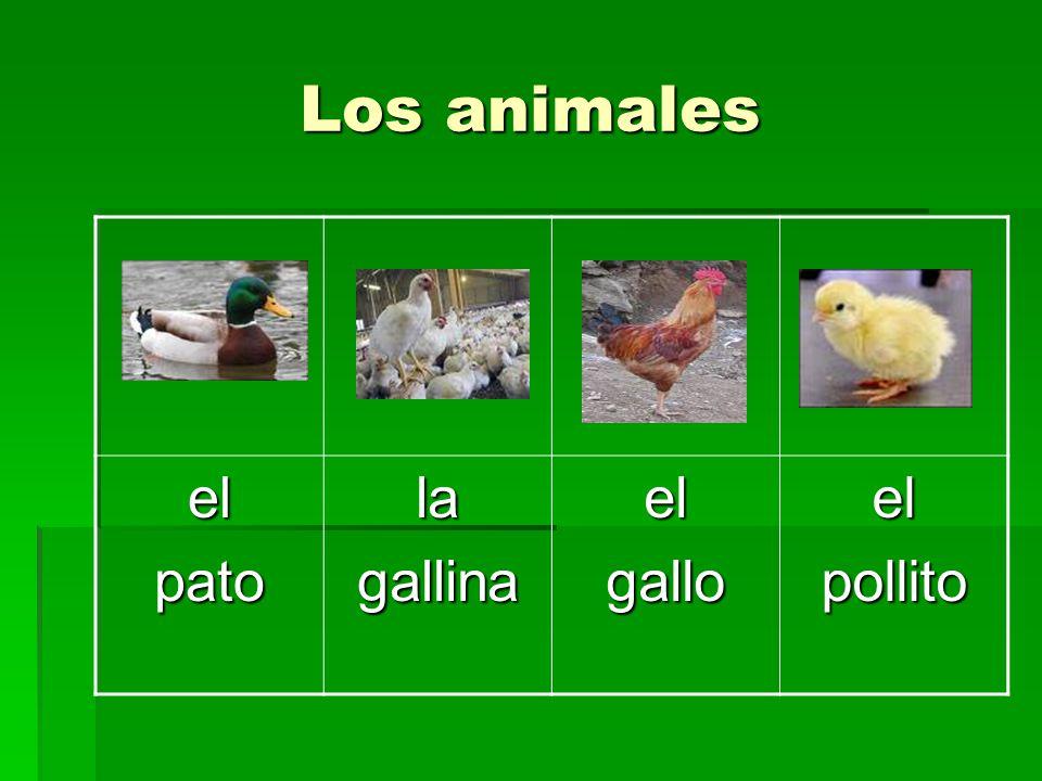 Los animales el pato la gallina gallo pollito