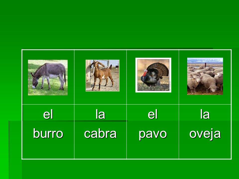 el burro la cabra pavo oveja