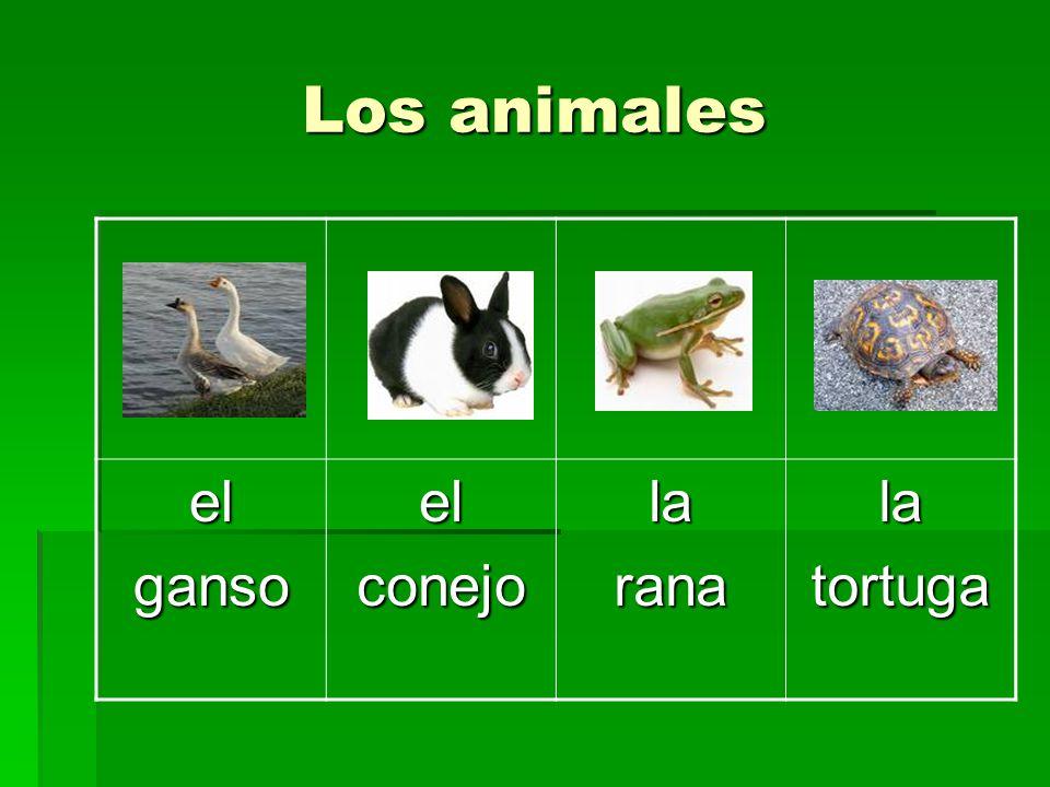 Los animales el ganso conejo la rana tortuga