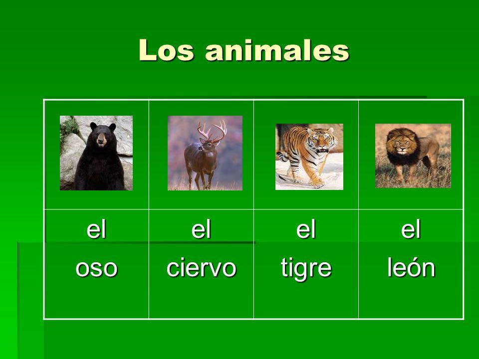 Los animales el oso ciervo tigre león