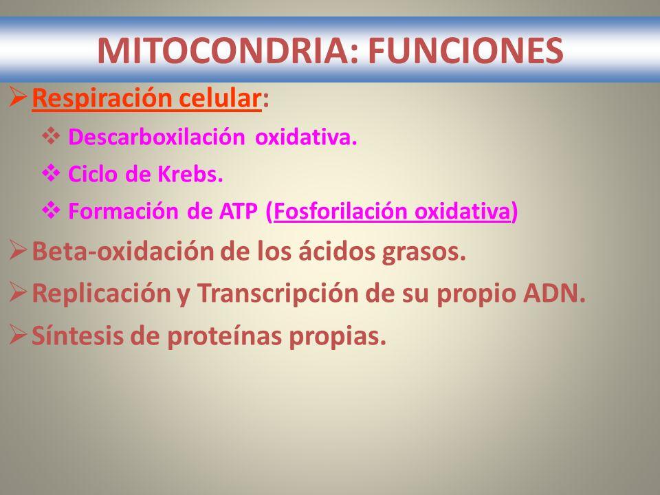 MITOCONDRIA: FUNCIONES