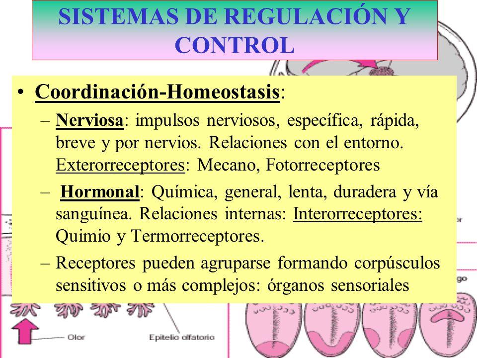 SISTEMAS DE REGULACIÓN Y CONTROL