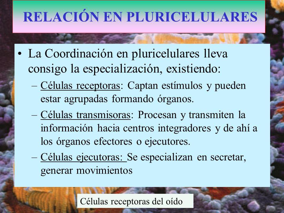 RELACIÓN EN PLURICELULARES