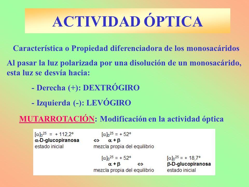ACTIVIDAD ÓPTICA Característica o Propiedad diferenciadora de los monosacáridos.