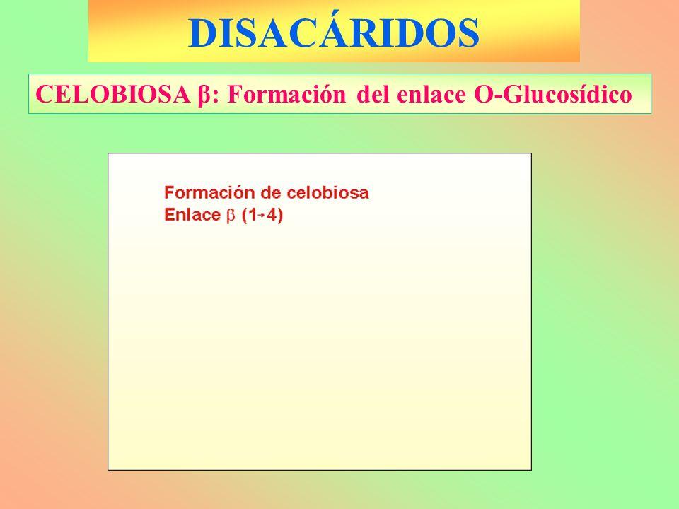 DISACÁRIDOS CELOBIOSA β: Formación del enlace O-Glucosídico