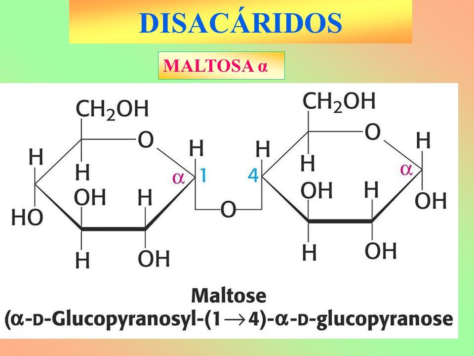 DISACÁRIDOS MALTOSA α