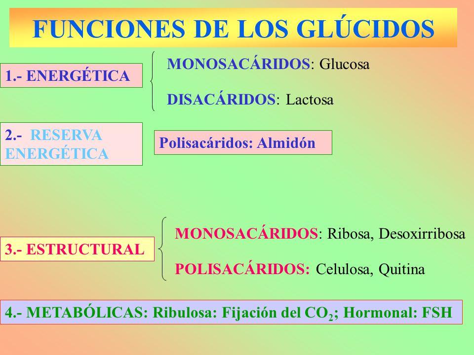 FUNCIONES DE LOS GLÚCIDOS