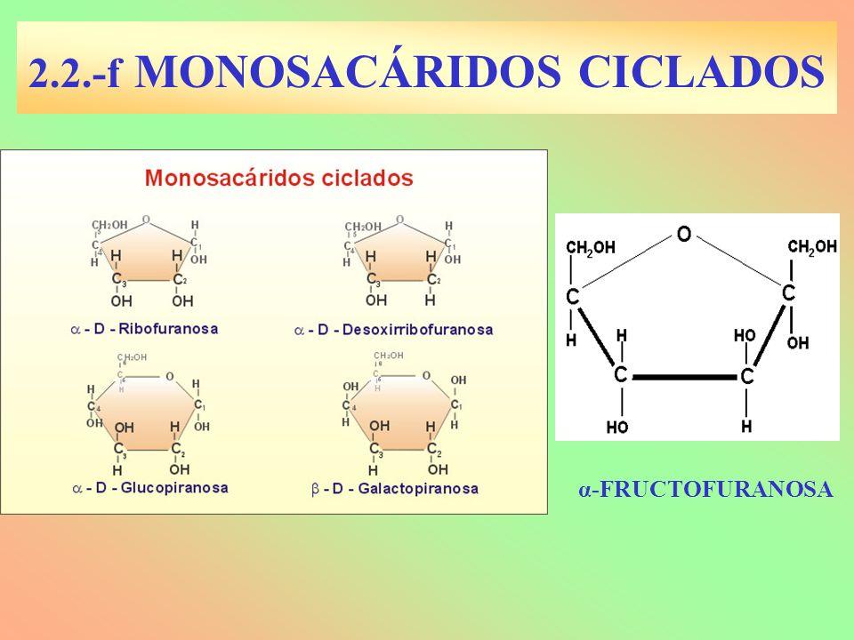 2.2.-f MONOSACÁRIDOS CICLADOS