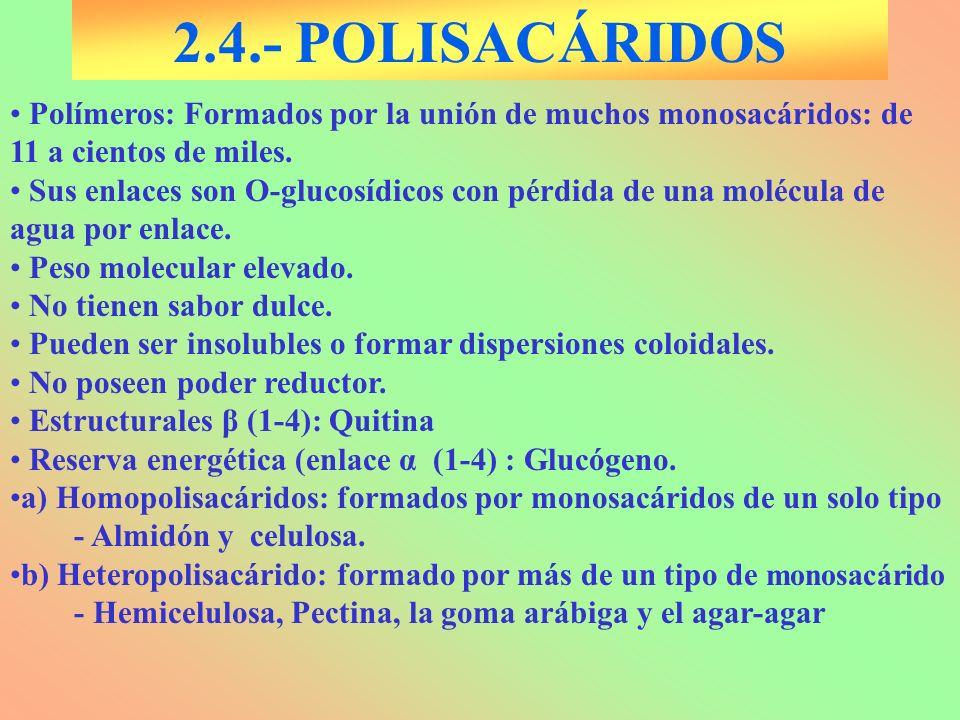 2.4.- POLISACÁRIDOS Polímeros: Formados por la unión de muchos monosacáridos: de 11 a cientos de miles.