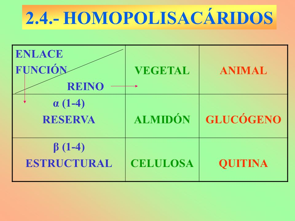 2.4.- HOMOPOLISACÁRIDOS ENLACE REINO VEGETAL ANIMAL α (1-4) RESERVA