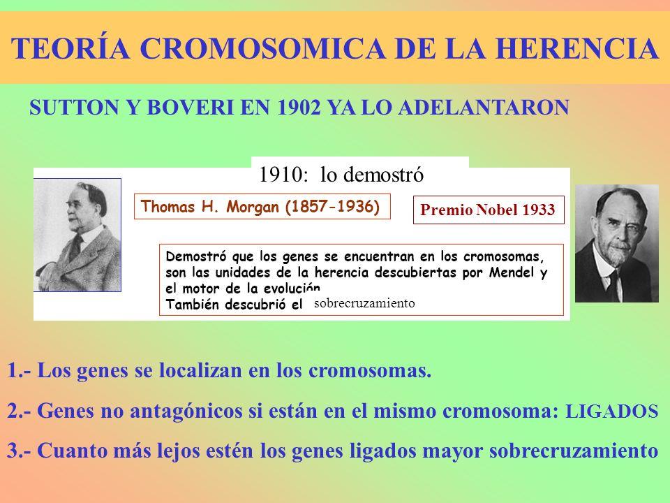 TEORÍA CROMOSOMICA DE LA HERENCIA
