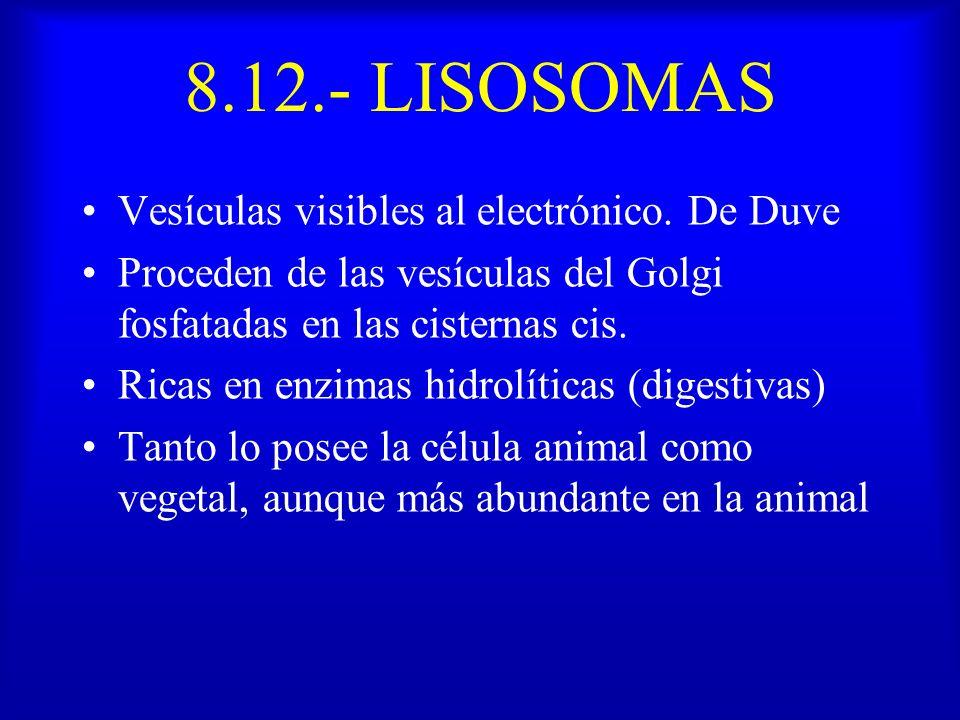 8.12.- LISOSOMAS Vesículas visibles al electrónico. De Duve