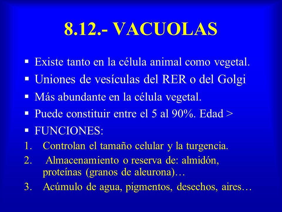 8.12.- VACUOLAS Uniones de vesículas del RER o del Golgi