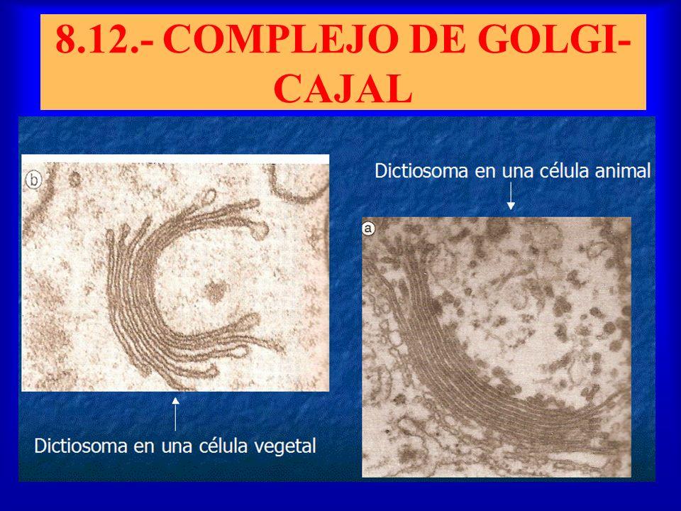 8.12.- COMPLEJO DE GOLGI-CAJAL