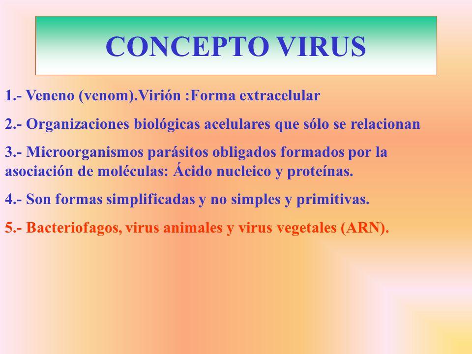 CONCEPTO VIRUS 1.- Veneno (venom).Virión :Forma extracelular