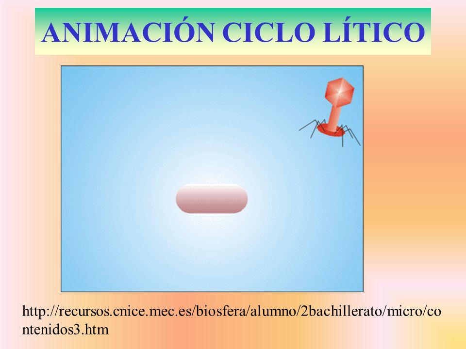 ANIMACIÓN CICLO LÍTICO