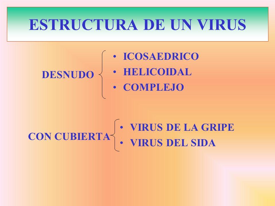 ESTRUCTURA DE UN VIRUS ICOSAEDRICO HELICOIDAL COMPLEJO DESNUDO