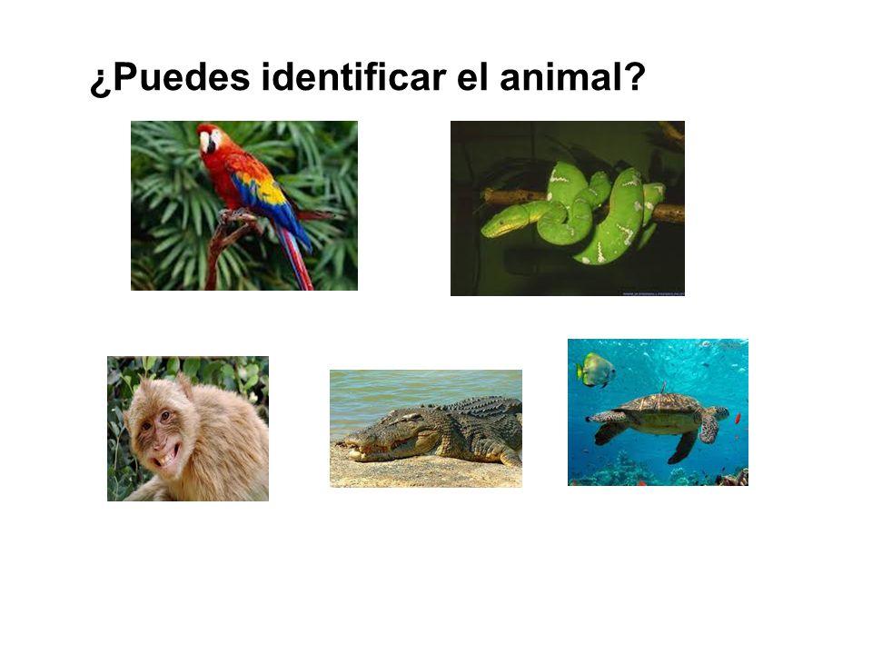 ¿Puedes identificar el animal