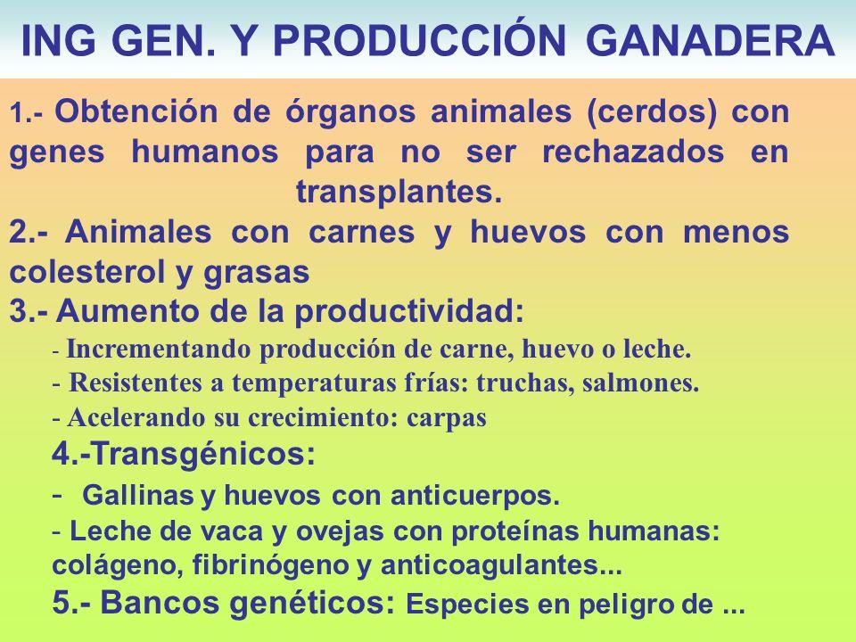 ING GEN. Y PRODUCCIÓN GANADERA