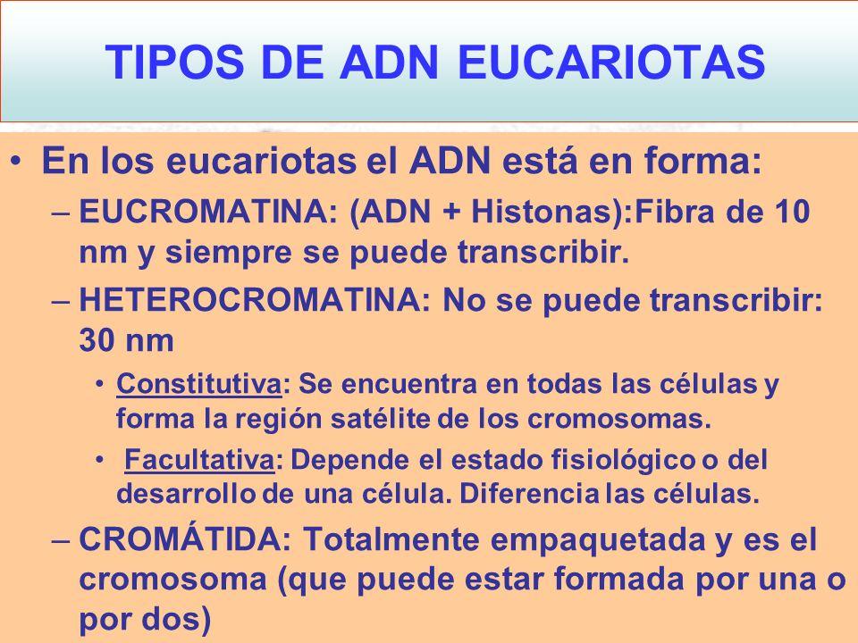 TIPOS DE ADN EUCARIOTAS