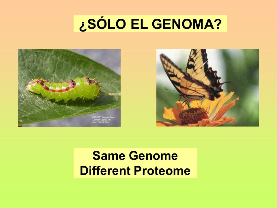 ¿SÓLO EL GENOMA Same Genome Different Proteome
