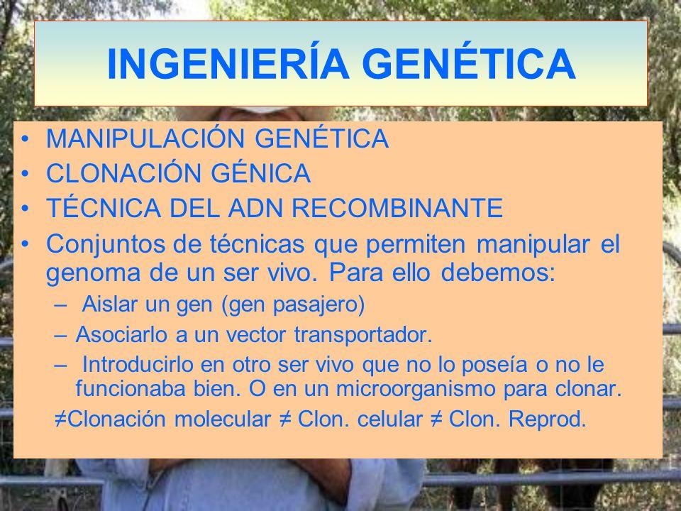 INGENIERÍA GENÉTICA MANIPULACIÓN GENÉTICA CLONACIÓN GÉNICA