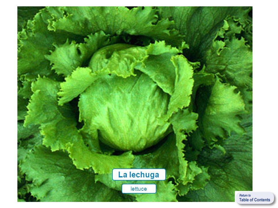 La lechuga lettuce