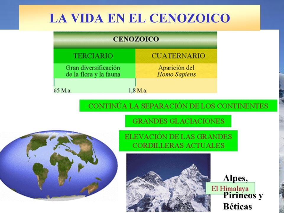 LA VIDA EN EL CENOZOICO Alpes, Pirineos y Béticas