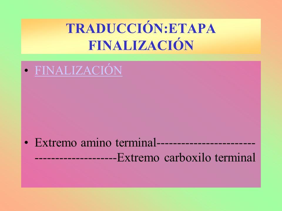 TRADUCCIÓN:ETAPA FINALIZACIÓN